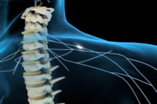 lesioni spinali,staminali