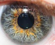 Nuova cornea artificiale sviluppata dai ricercatori dell'Istituto Fraunhofer di Postdam