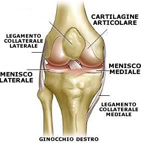 Lesione della Cartilagine: Cos'è? Cause, Sintomi, Diagnosi, Terapia e Prognosi