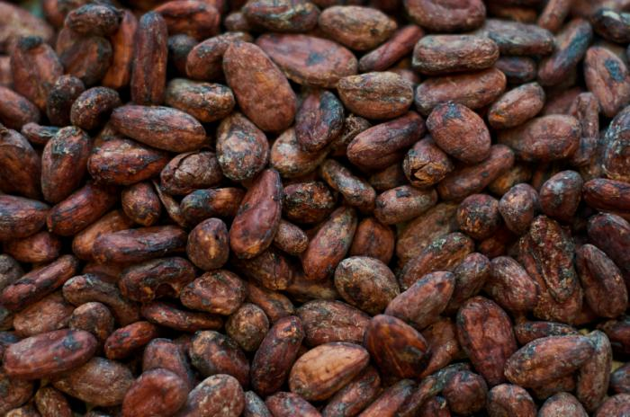 cacao,morbo di alzheimer