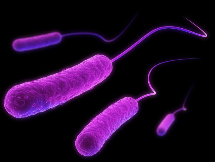 antibiotico resistenza,aspergillomarasmine A