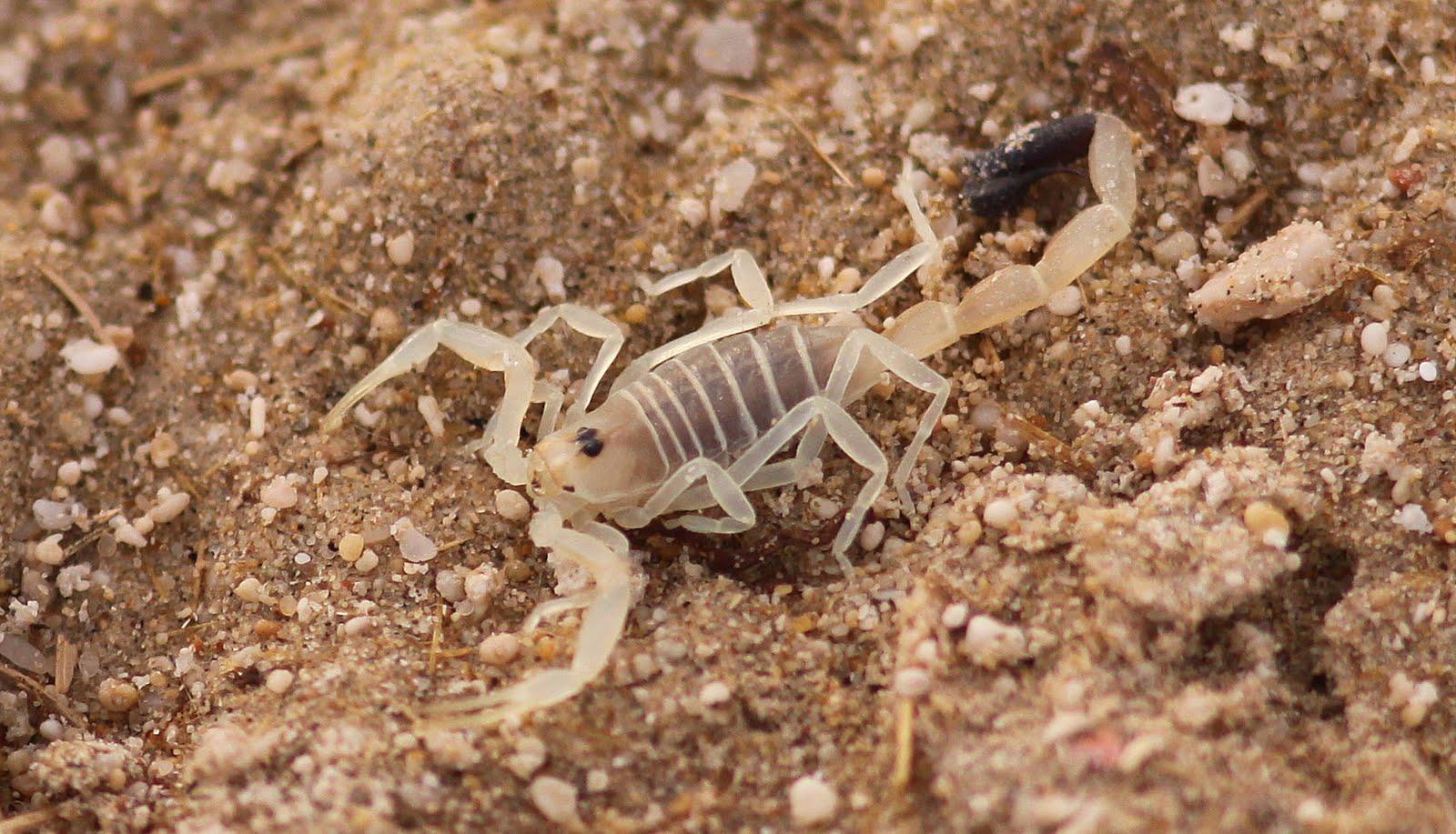 Veleno di ape serpente o scorpione potenziale trattamento per il cancro - Cancro e scorpione a letto ...