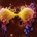 cancro,veleno