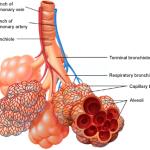 asma,BPCO