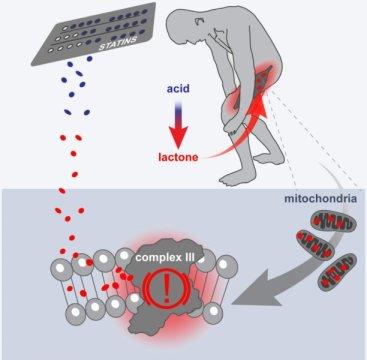 dolori muscolari,statine