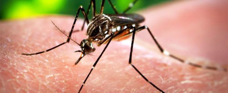 Virus Zika, un lupo travestito da agnello