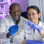 Nanoparticelle da LDL e olio di pesce uccidono le cellule del cancro del fegato