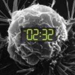 L'interruzione del ritmo circadiano durante i turni di notte favorisce lo sviluppo del cancro