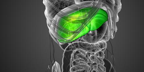 Nuove intuizioni sulla relazione tra fegato grasso, eccesso di peso e costrizione vascolare