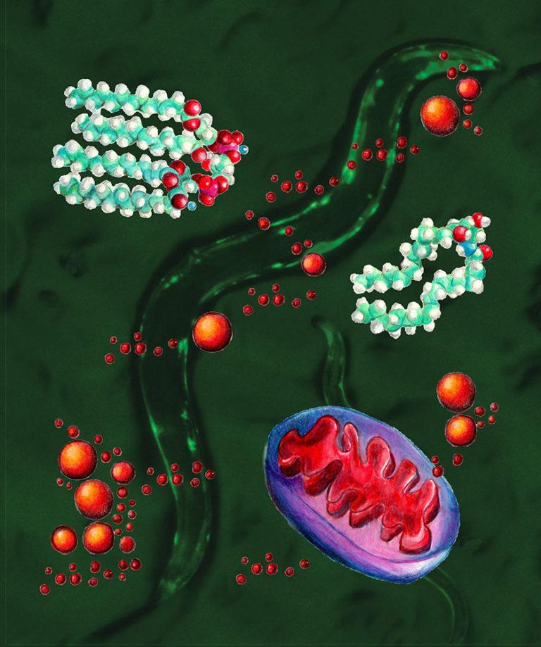 Alcuni tipi di grassi possono proteggerci da malattie neurodegenerative