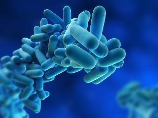 Nuove intuizioni su come i batteri resistenti ai farmaci costruiscono le loro difese
