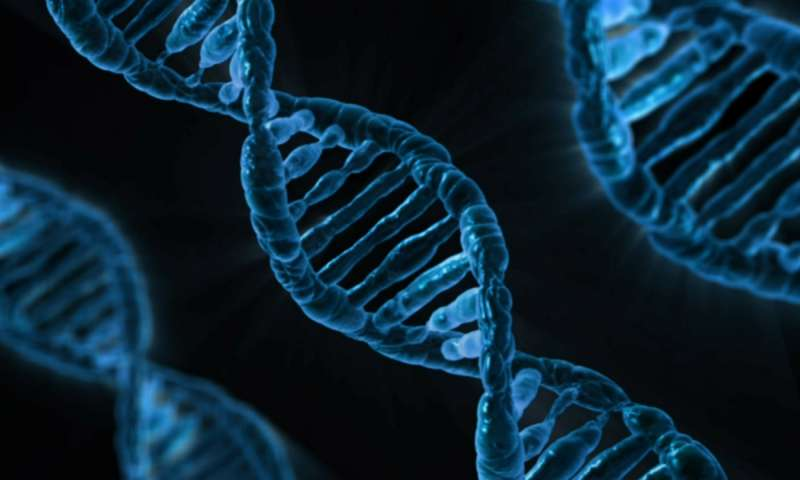 Individuati i geni collegati allo sviluppo della vitiligine