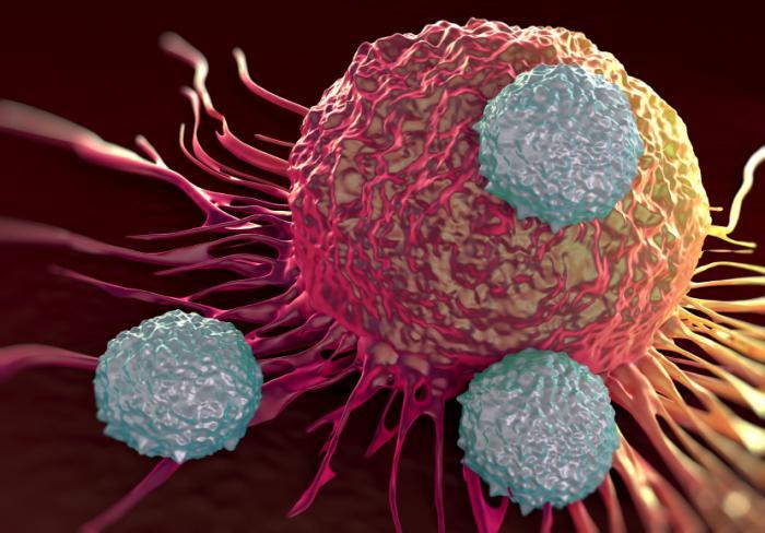 Batteri intestinali aumentano l'efficacia della chemioterapia