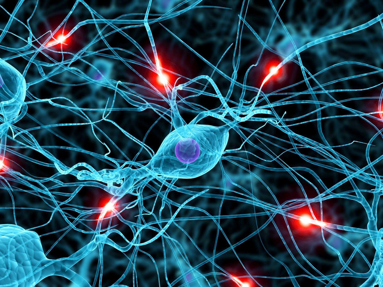 cellule nervose embrionali
