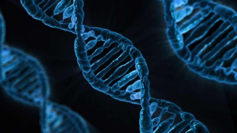 Individuati nuovi geni coinvolti nella funzione del cuore