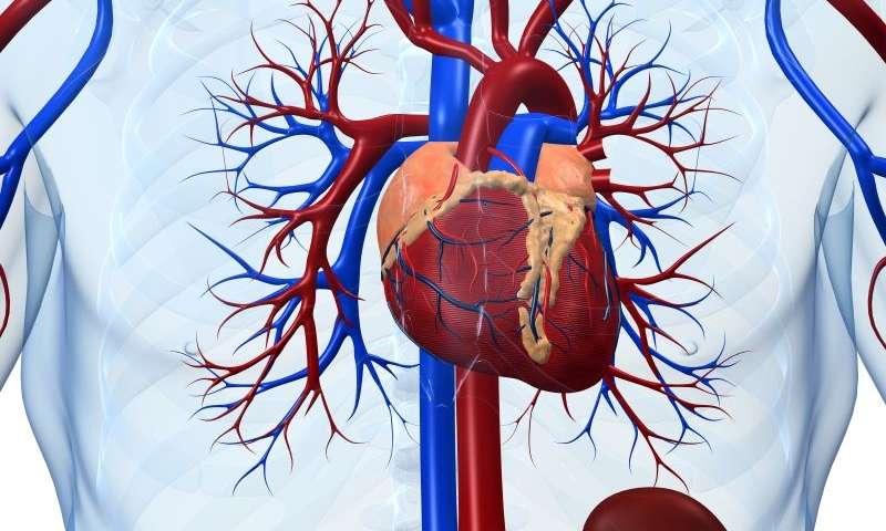 insufficienza cardiaca,malattia di alzheimer