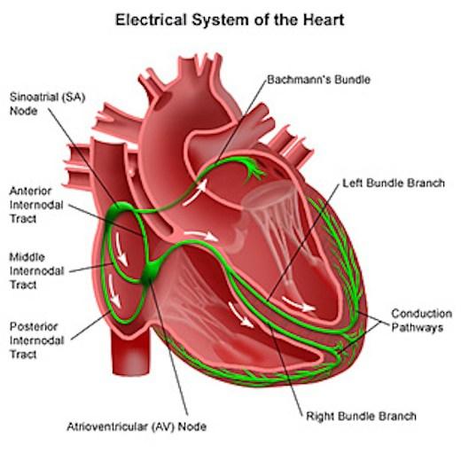 Individuati due farmaci che invertono l'aritmia cardiaca: una delle più gravi complicazioni del diabete