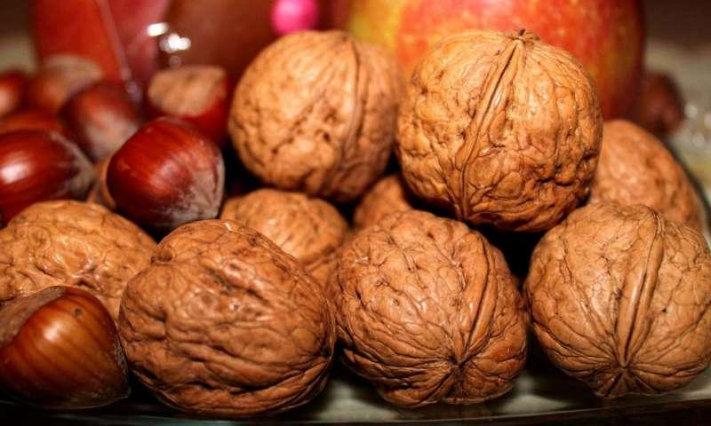 cancro del colon,frutti a guscio