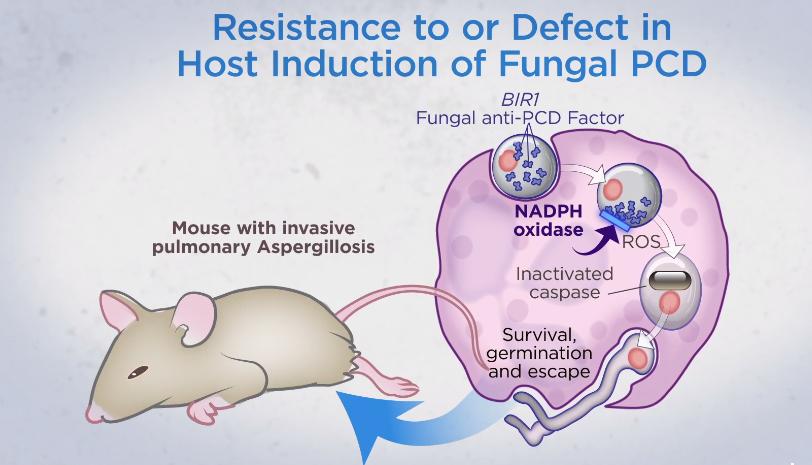 infezioni polmonari fungine