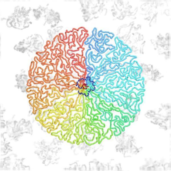 divisione cellulare,DNA