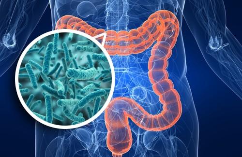 microbiota intestinale,obesità