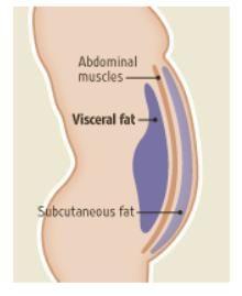 diabete di tipo 2,grasso addominale