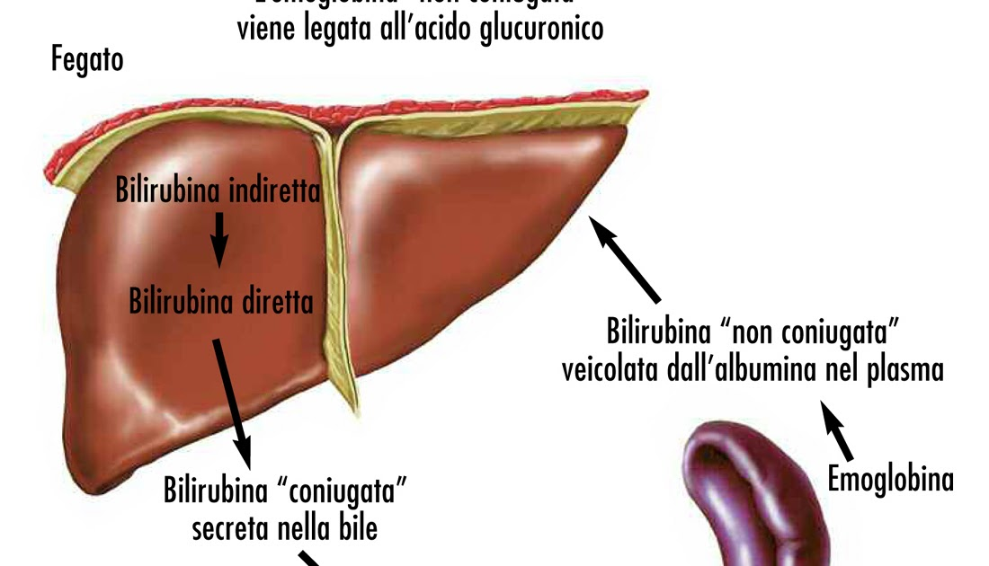 bilirubina,malattia cardiovascolare