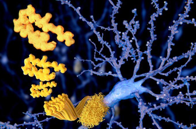 beta amiloide