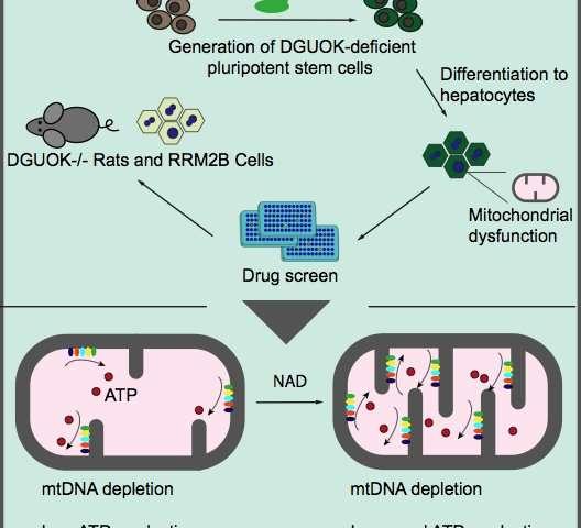 Sindrome da deplezione del DNA mitocondriale