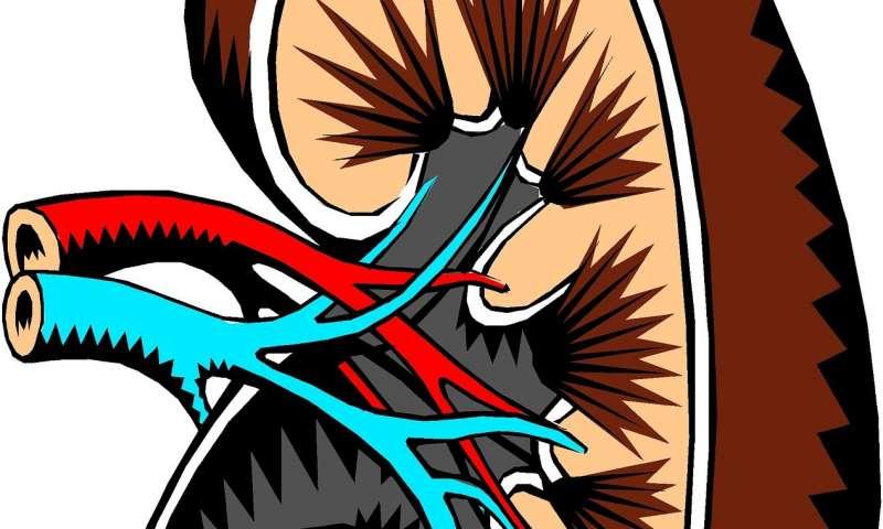malattia renale