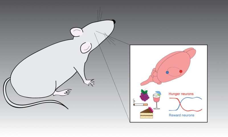 circuiti di ricompensa del cervello