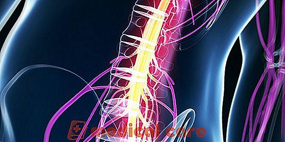 lesione del midollo spinale
