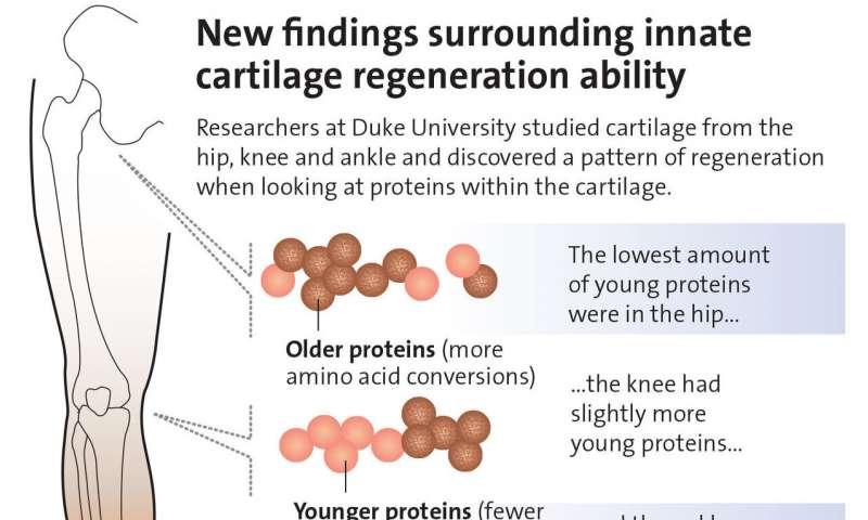 artrite,cartilagine