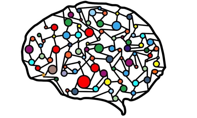 attività neurale