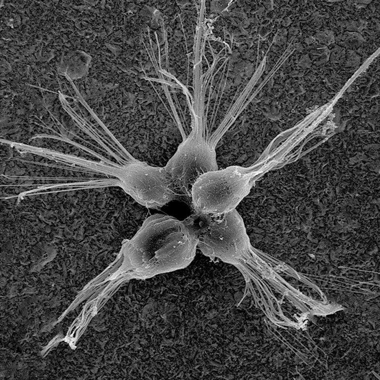 I microbi marini unicellulari potrebbero abbattere i virus