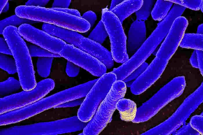 Identificato potenziale nuovo bersaglio farmacologico per pericolose infezioni da E.coli